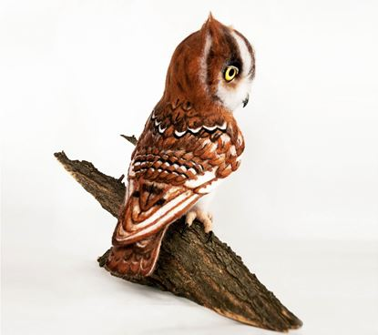 Picture of Owl RUNO ART